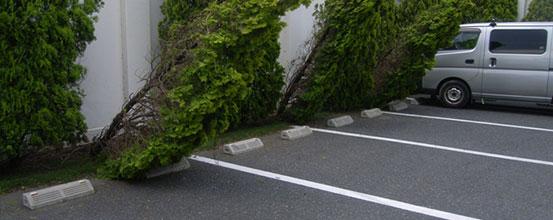 倒木の緊急対応も承ります